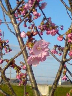 春の足音。その2☆