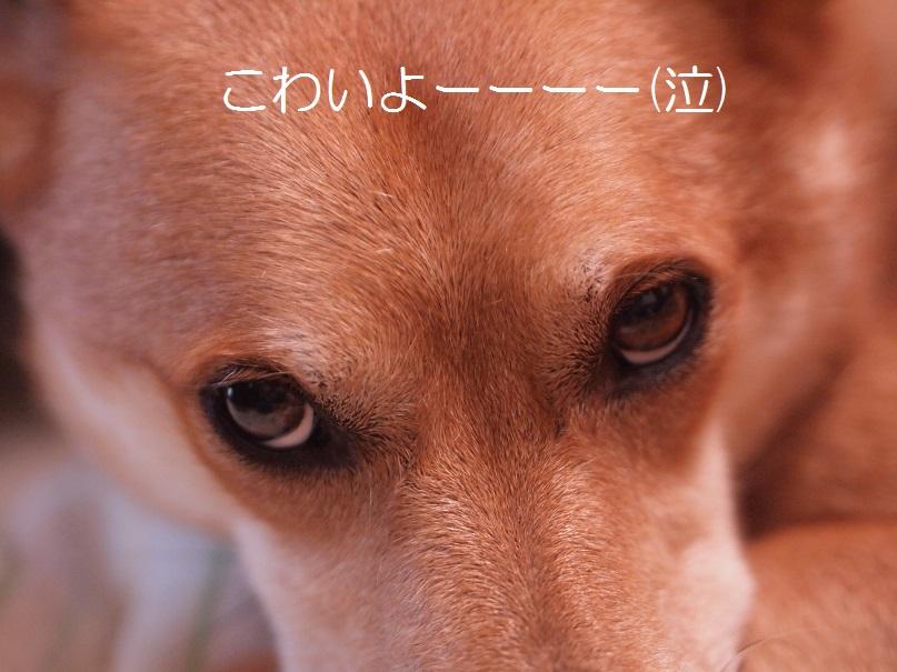 Kowaiyo2